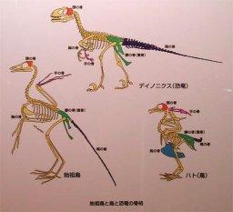 恐竜 爬虫類 鳥類 どっち